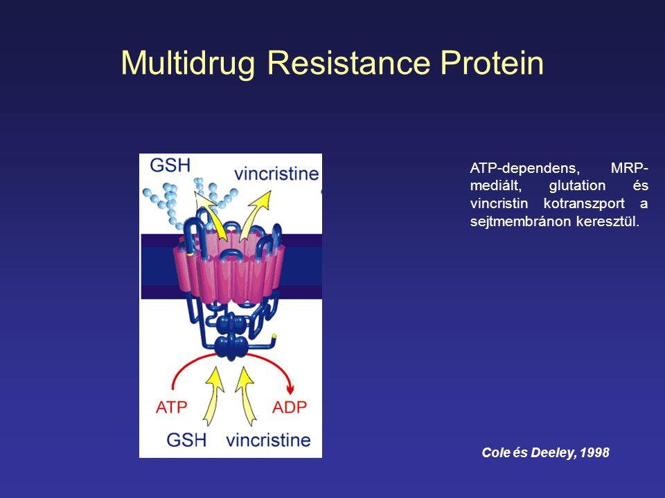 Multidrug Resistance Protein ATP-dependens, MRP- mediált, glutation és vincristin kotranszport a sejtmembránon keresztül. Cole és Deeley, 1998