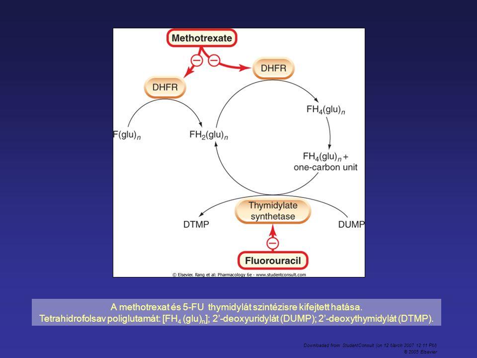 A methotrexat és 5-FU thymidylát szintézisre kifejtett hatása. Tetrahidrofolsav poliglutamát: [FH 4 (glu) n ]; 2-deoxyuridylát (DUMP); 2-deoxythymidyl