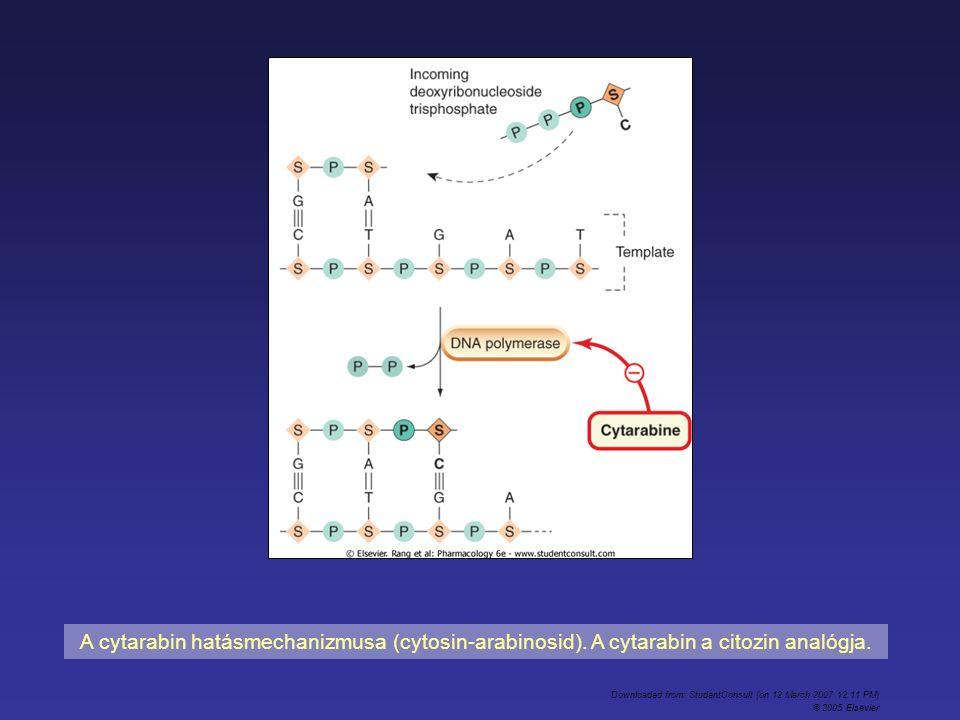 A cytarabin hatásmechanizmusa (cytosin-arabinosid). A cytarabin a citozin analógja. Downloaded from: StudentConsult (on 12 March 2007 12:11 PM) © 2005