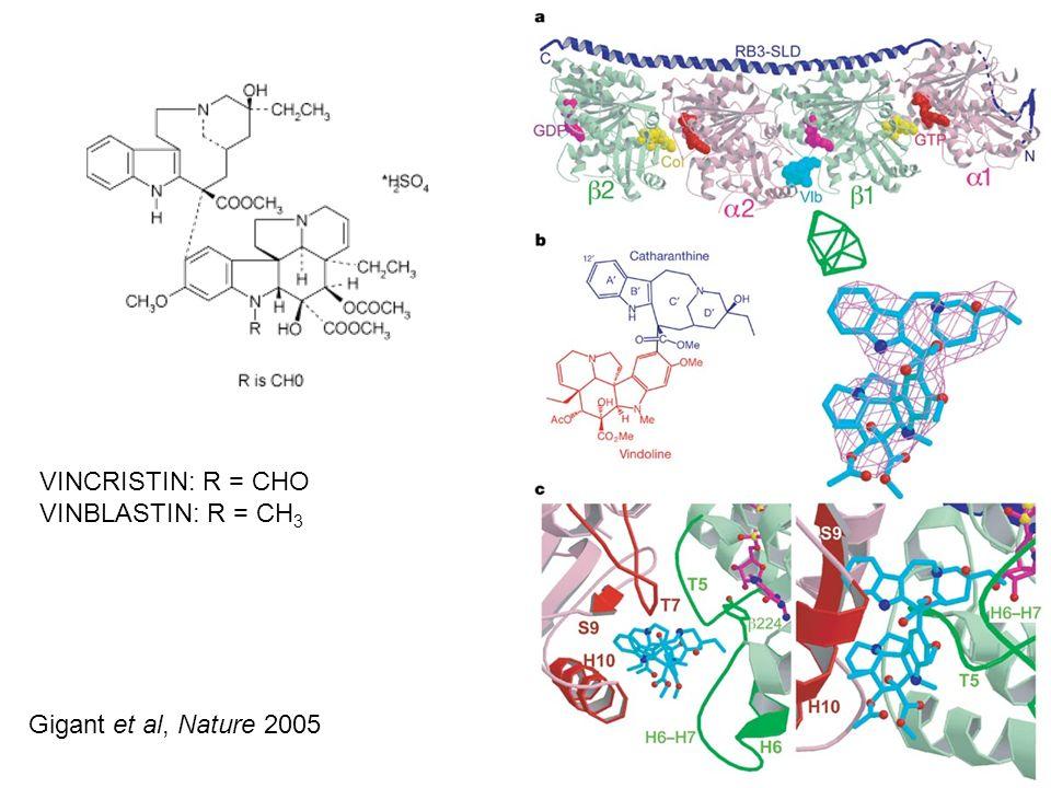VINCRISTIN: R = CHO VINBLASTIN: R = CH 3 Gigant et al, Nature 2005