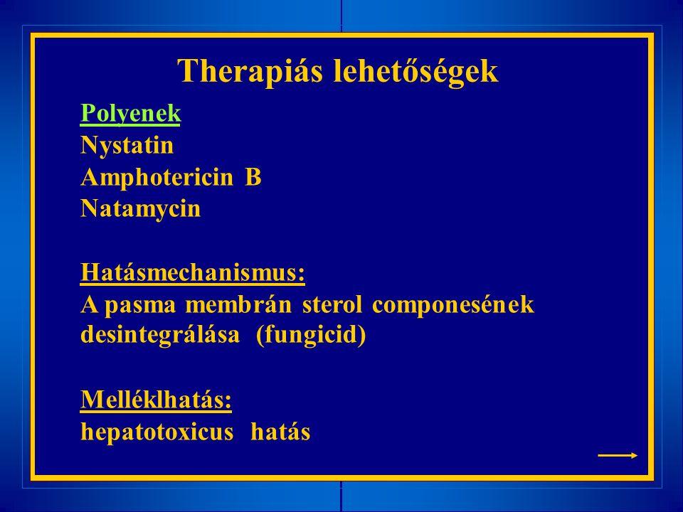 Therapiás lehetőségek Polyenek Nystatin Amphotericin B Natamycin Hatásmechanismus: A pasma membrán sterol componesének desintegrálása (fungicid) Melléklhatás: hepatotoxicus hatás