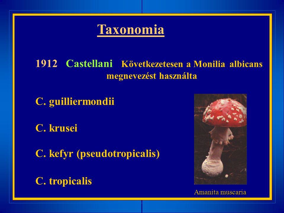 1912 Castellani Következetesen a Monilia albicans megnevezést használta C. guilliermondii C. krusei C. kefyr (pseudotropicalis) C. tropicalis Taxonomi