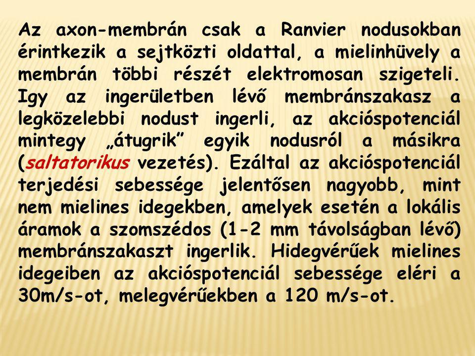 Az axon-membrán csak a Ranvier nodusokban érintkezik a sejtközti oldattal, a mielinhüvely a membrán többi részét elektromosan szigeteli. Igy az ingerü