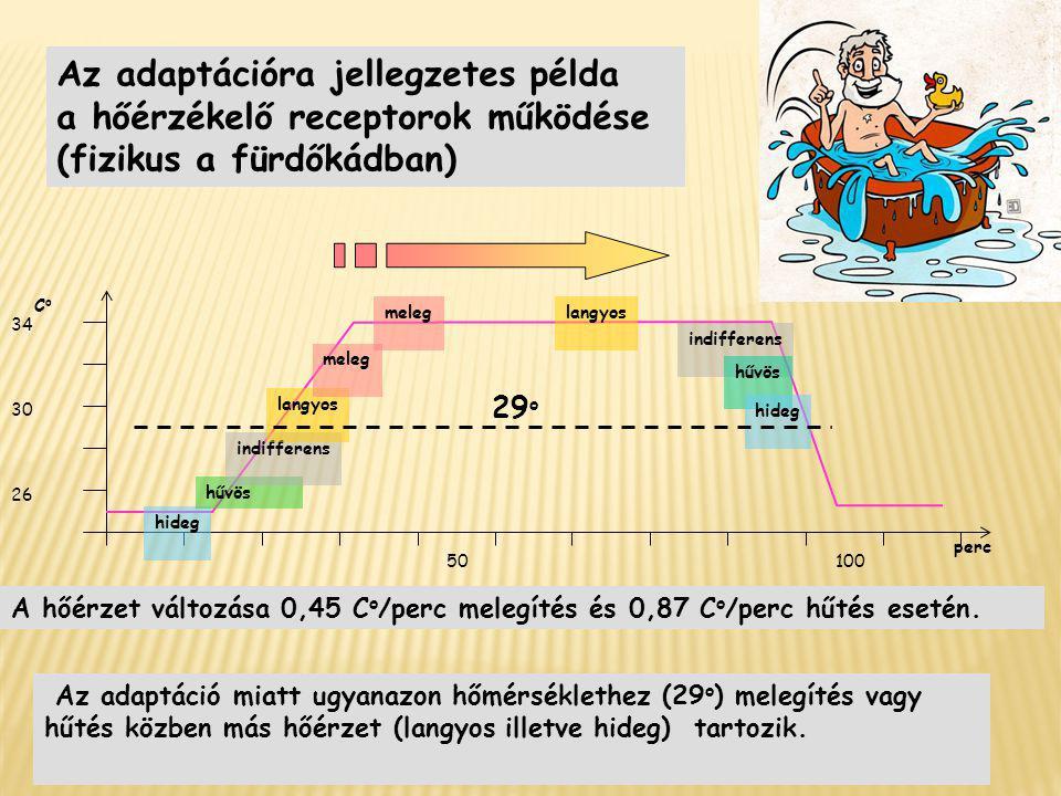 Az adaptációra jellegzetes példa a hőérzékelő receptorok működése (fizikus a fürdőkádban) 50100 26 CoCo 30 34 perc hideg hűvös indifferens langyos mel