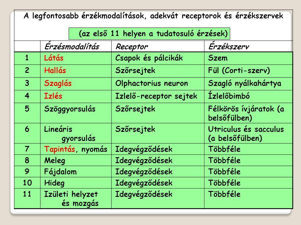 A legfontosabb érzékmodalítások, adekvát receptorok és érzékszervek (az első 11 helyen a tudatosuló érzések) ÉrzésmodalításReceptorÉrzékszerv 1LátásCs