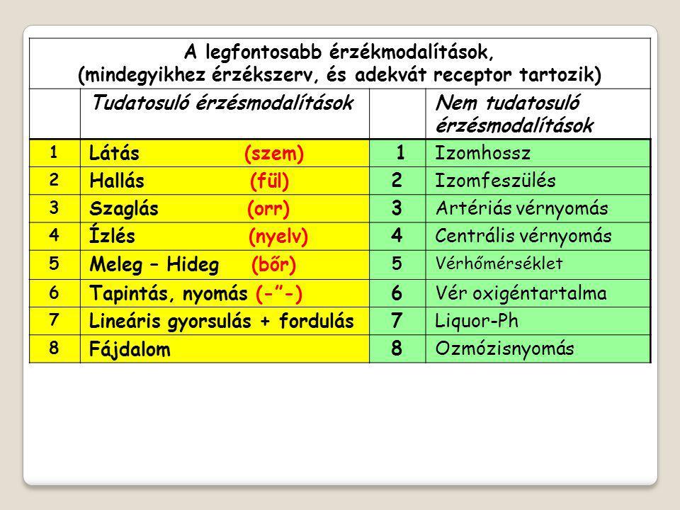 A legfontosabb érzékmodalítások, (mindegyikhez érzékszerv, és adekvát receptor tartozik) Tudatosuló érzésmodalítások Nem tudatosuló érzésmodalítások 1