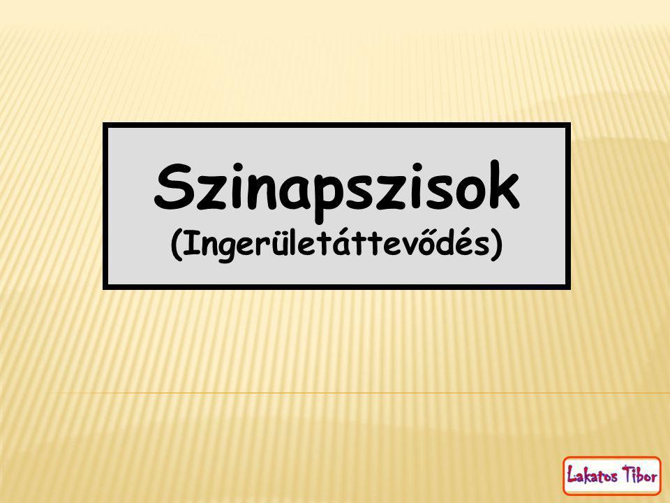 Szinapszisok (Ingerületáttevődés)