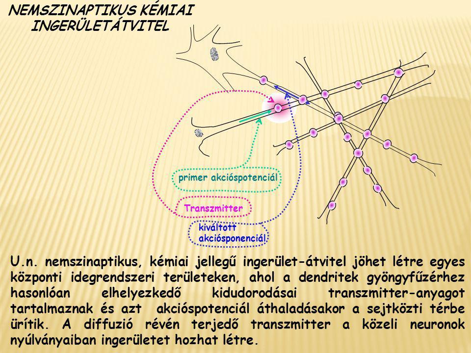 NEMSZINAPTIKUS KÉMIAI INGERÜLETÁTVITEL U.n. nemszinaptikus, kémiai jellegű ingerület-átvitel jöhet létre egyes központi idegrendszeri területeken, aho