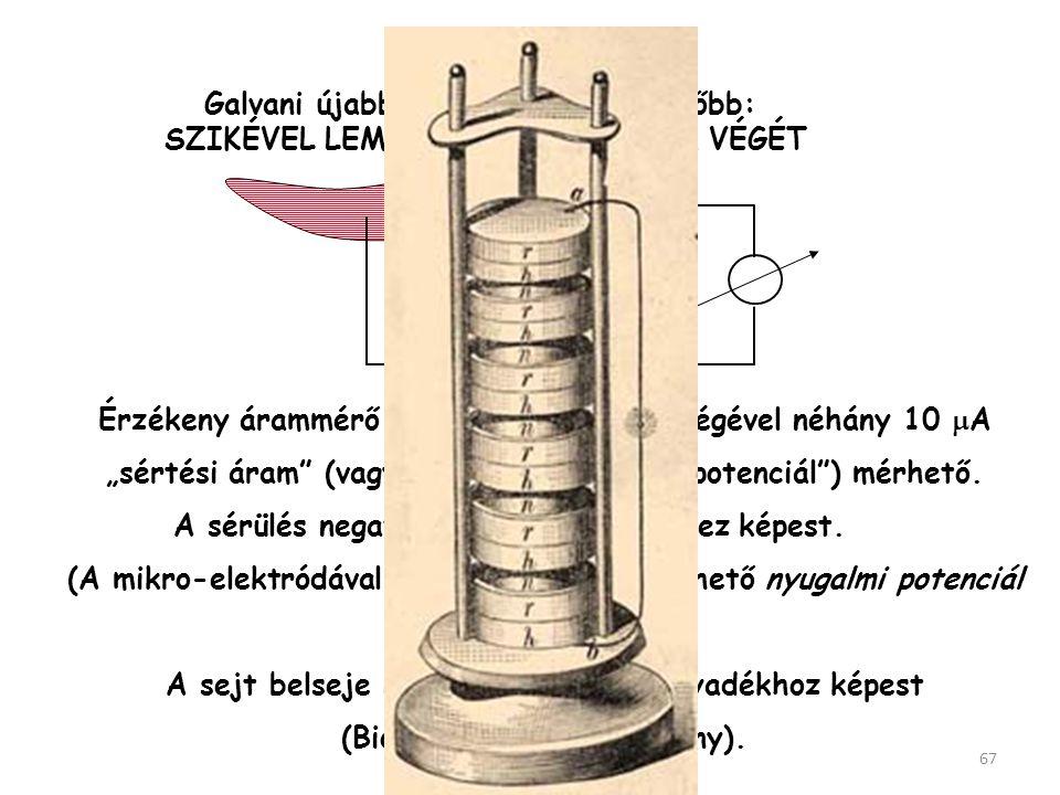 Galvani úgy vélte hogy felfedezte a bioelektromosságot (állati elektromosság: animal electricity). Valójában, mint azt ALESSANDRO VOLTA bebizonyította