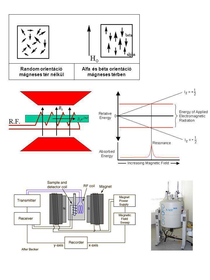 Alfa és béta orientáció mágneses térben Random orientáció mágneses tér nélkül