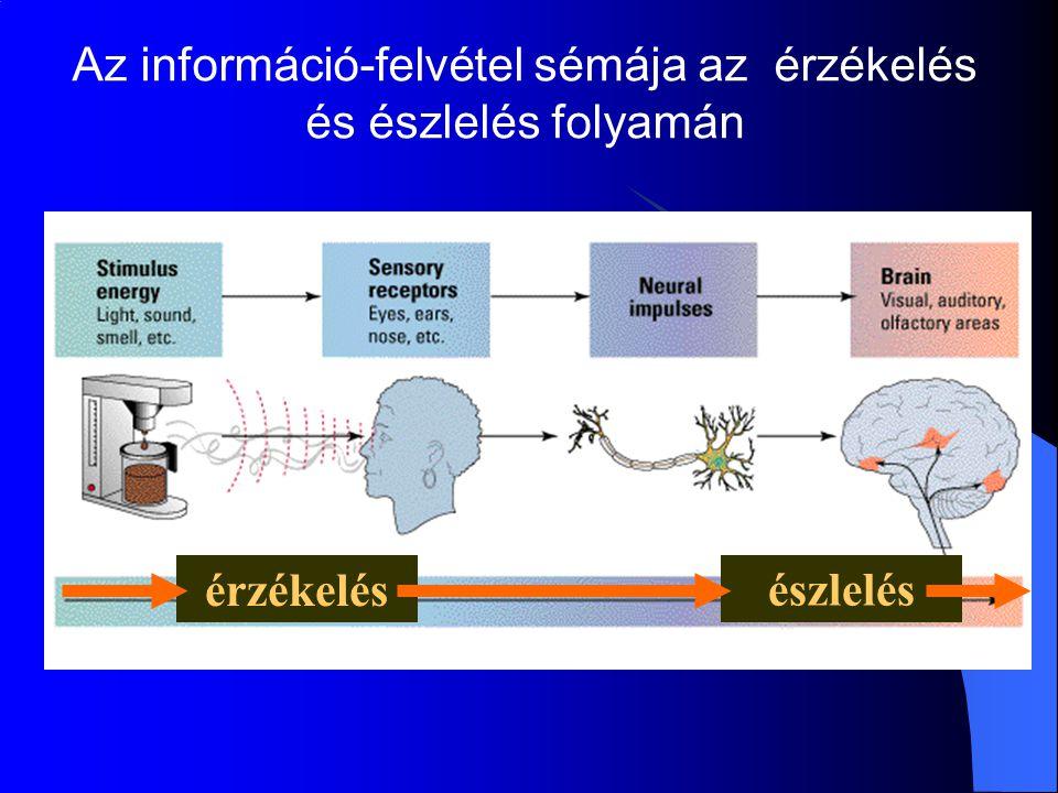 Az információ-felvétel sémája az érzékelés és észlelés folyamán érzékelés észlelés