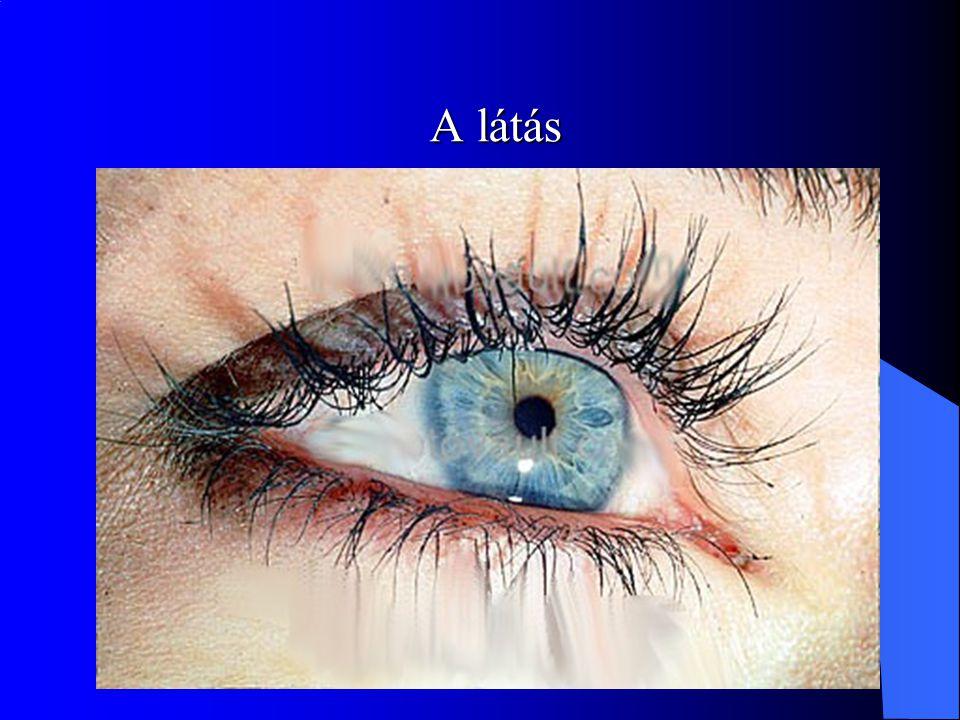 A látás