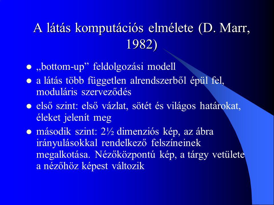"""A látás komputációs elmélete (D. Marr, 1982) """"bottom-up"""" feldolgozási modell a látás több független alrendszerből épül fel, moduláris szerveződés első"""