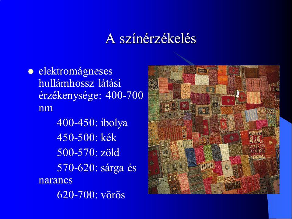 A színérzékelés elektromágneses hullámhossz látási érzékenysége: 400-700 nm 400-450: ibolya 450-500: kék 500-570: zöld 570-620: sárga és narancs 620-700: vörös