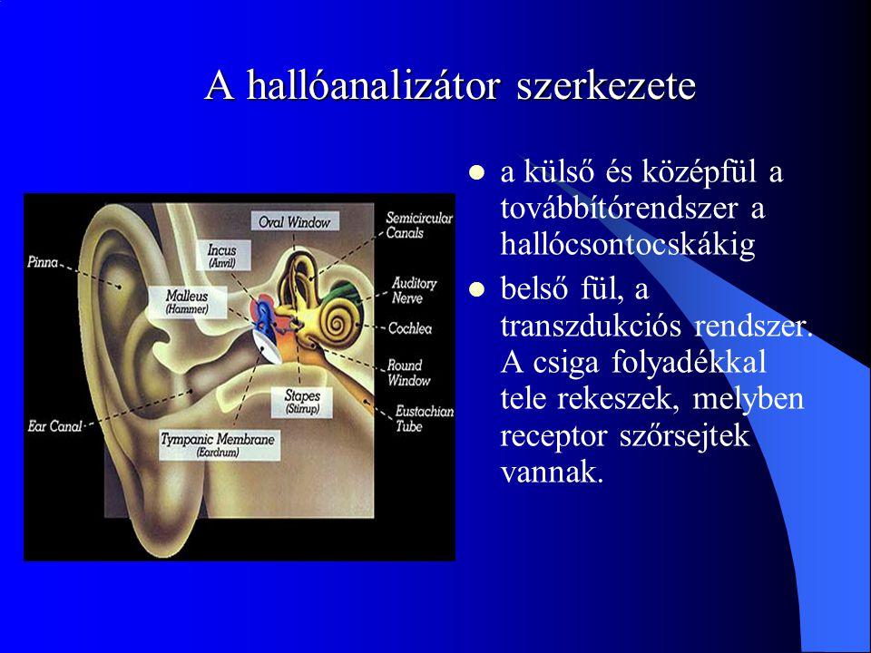 A hallóanalizátor szerkezete a külső és középfül a továbbítórendszer a hallócsontocskákig belső fül, a transzdukciós rendszer. A csiga folyadékkal tel