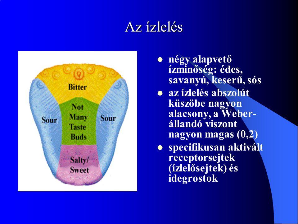 Az ízlelés négy alapvető ízminőség: édes, savanyú, keserű, sós az ízlelés abszolút küszöbe nagyon alacsony, a Weber- állandó viszont nagyon magas (0,2) specifikusan aktivált receptorsejtek (ízlelősejtek) és idegrostok