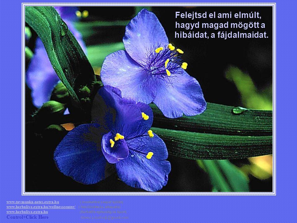 Mert csak ők tudják értékelni a dolgok fontosságát; nyomot hagyni magunk után az életben. www.tavmunka-netes.extra.huwww.tavmunka-netes.extra.hu ( mun