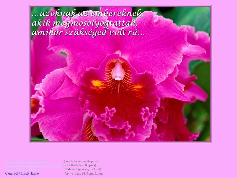 …azoknak az embereknek, akik az életedet így, vagy úgy meghatározták… www.tavmunka-netes.extra.huwww.tavmunka-netes.extra.hu ( munkatársi csapat épités) www.herbalive.extra.hu/wellnesscenter/ ( felnőttoktatás, átképzés) www.herbalive.extra.hu (Herbalife egészség és Sport) Control+Click Here ferenc.j.szabadi@gmail.com www.herbalive.extra.hu/wellnesscenter/ www.herbalive.extra.hu