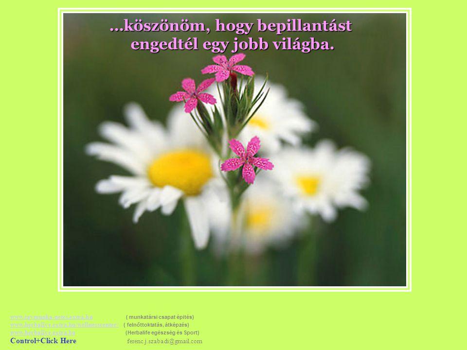 …milyen sokat jelent az ő barátságuk, vagy egyszerűen… www.tavmunka-netes.extra.huwww.tavmunka-netes.extra.hu ( munkatársi csapat épités) www.herbalive.extra.hu/wellnesscenter/ ( felnőttoktatás, átképzés) www.herbalive.extra.hu (Herbalife egészség és Sport) Control+Click Here ferenc.j.szabadi@gmail.com www.herbalive.extra.hu/wellnesscenter/ www.herbalive.extra.hu