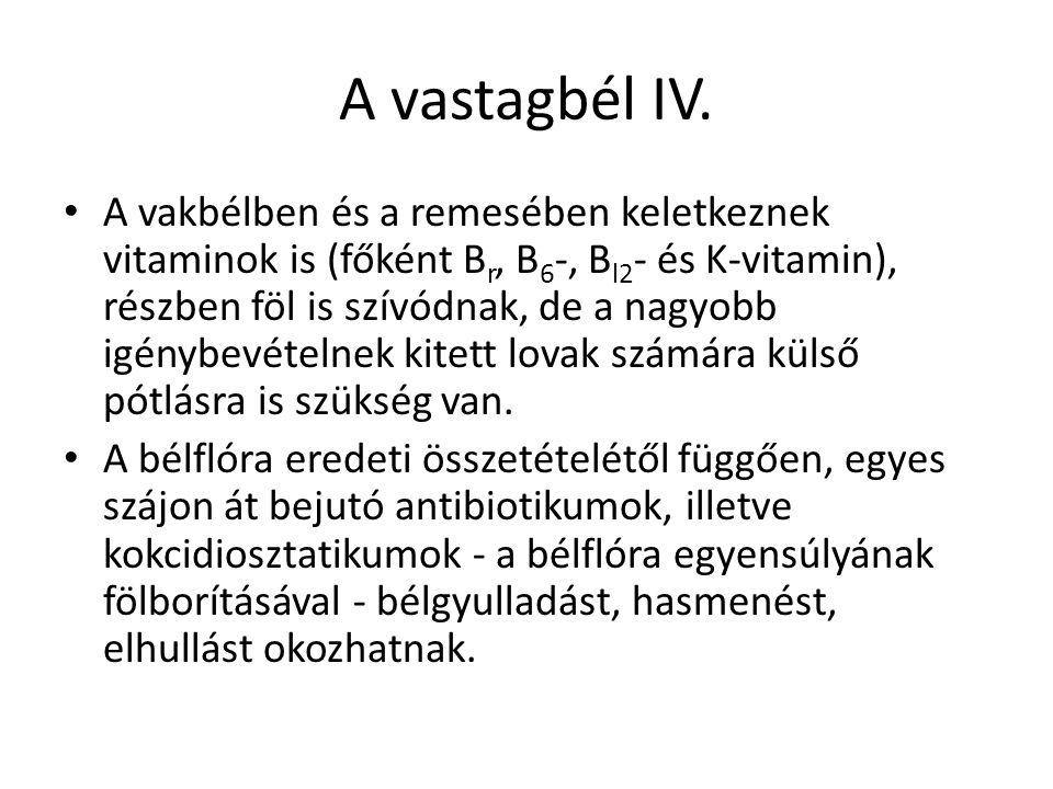 A vastagbél IV. A vakbélben és a remesében keletkeznek vitaminok is (főként B r, B 6 -, B l2 - és K-vitamin), részben föl is szívódnak, de a nagyobb