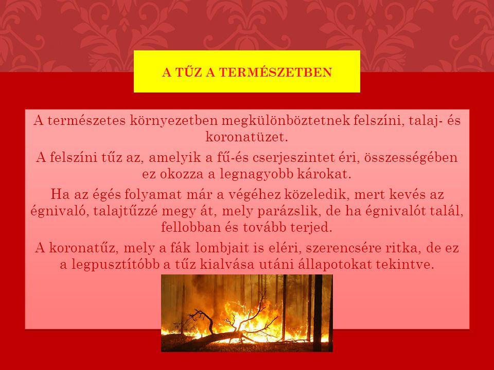 Az első tüzek egyidősek a növényvilág szárazföldi létével.