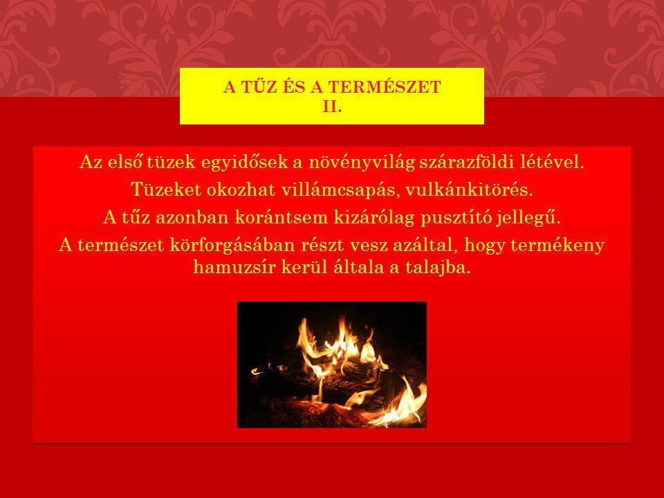 Az első tüzek egyidősek a növényvilág szárazföldi létével. Tüzeket okozhat villámcsapás, vulkánkitörés. A tűz azonban korántsem kizárólag pusztító jel