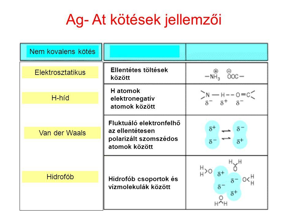 11 Nem kovalens kötés H-híd Van der Waals Hidrofób Elektrosztatikus Ellentétes töltések között H atomok elektronegatív atomok között Fluktuáló elektro