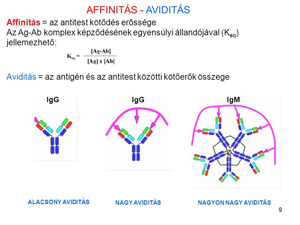 9 AFFINITÁS - AVIDITÁS Affinitás = az antitest kötődés erőssége Az Ag-Ab komplex képződésének egyensúlyi állandójával (K eq ) jellemezhető: Aviditás =