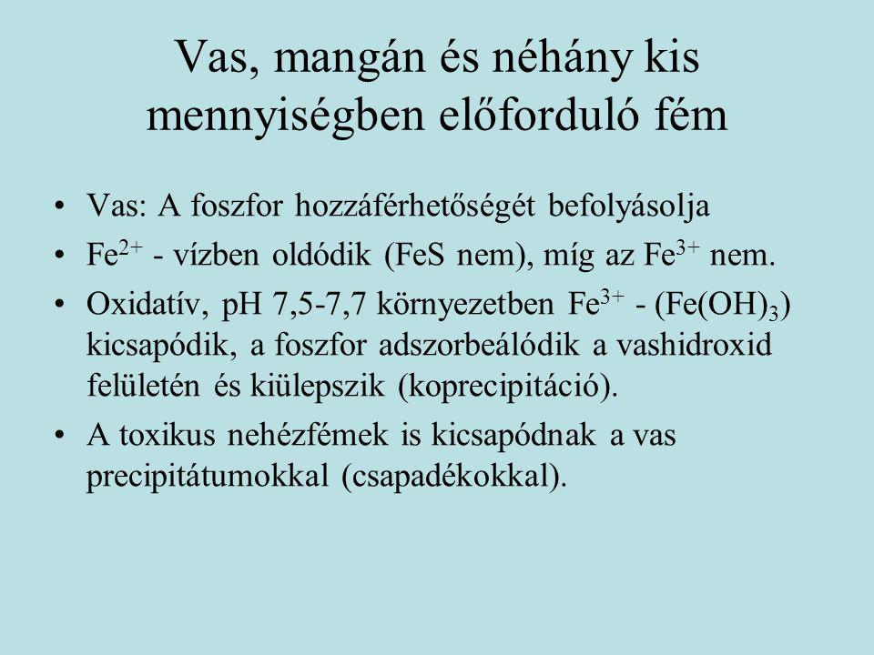 Vas, mangán és néhány kis mennyiségben előforduló fém Vas: A foszfor hozzáférhetőségét befolyásolja Fe 2+ - vízben oldódik (FeS nem), míg az Fe 3+ nem