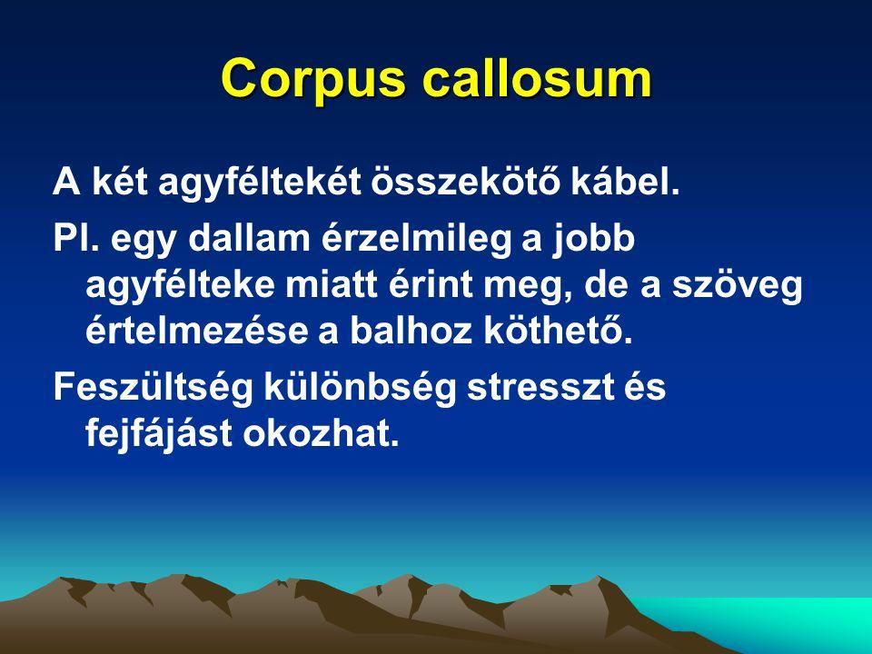 Corpus callosum A két agyféltekét összekötő kábel. Pl. egy dallam érzelmileg a jobb agyfélteke miatt érint meg, de a szöveg értelmezése a balhoz köthe