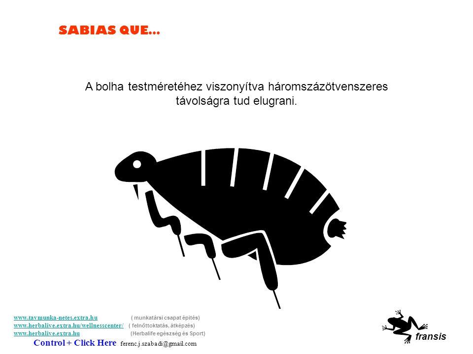 SABIAS QUE… A jegesmedvék süketek.