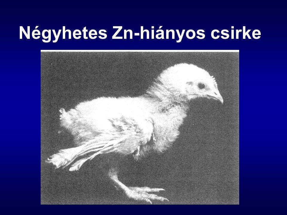 Négyhetes Zn-hiányos csirke