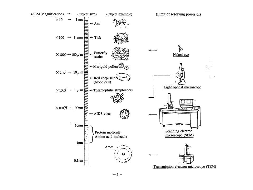 Félvezető detektor (visszaszórt elektronok (BSE) detektálására)