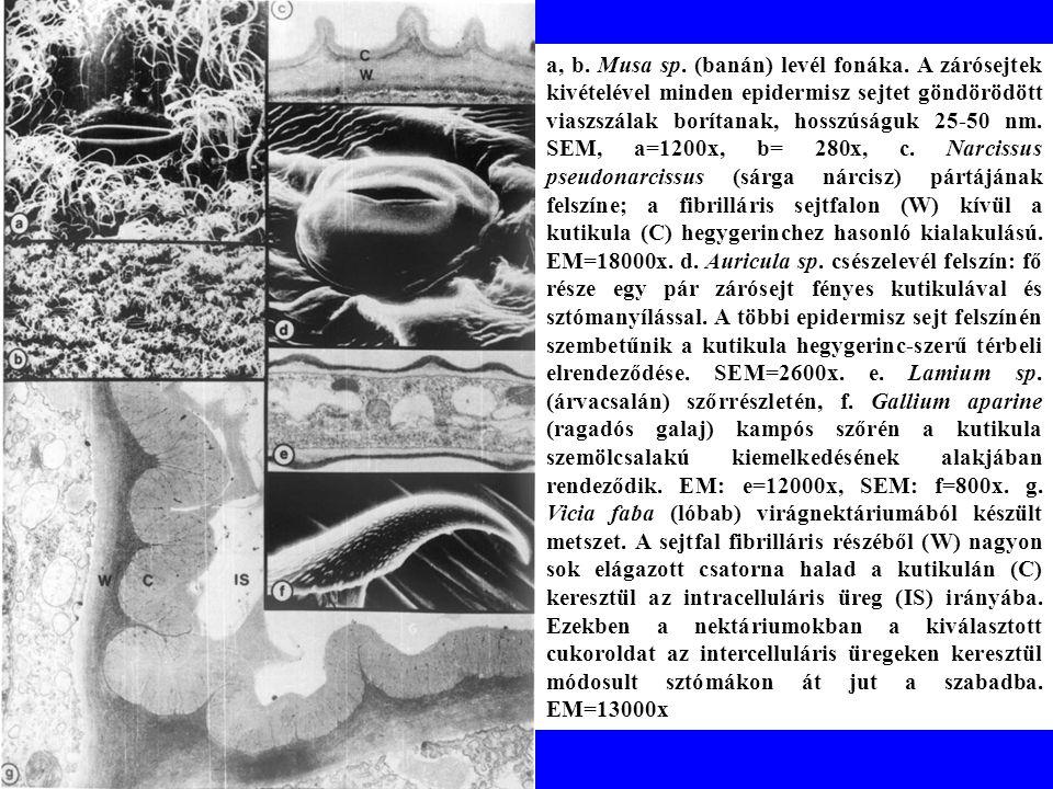 a, b.Musa sp. (banán) levél fonáka.