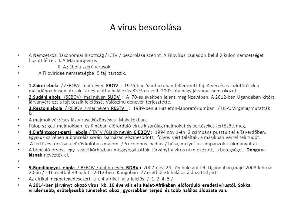 A vírus besorolása A Nemzetközi Taxonómiai Bizottság / ICTV / besorolása szerint A Filovírus családon belül 2 külön nemzetséget hozott létre : I.