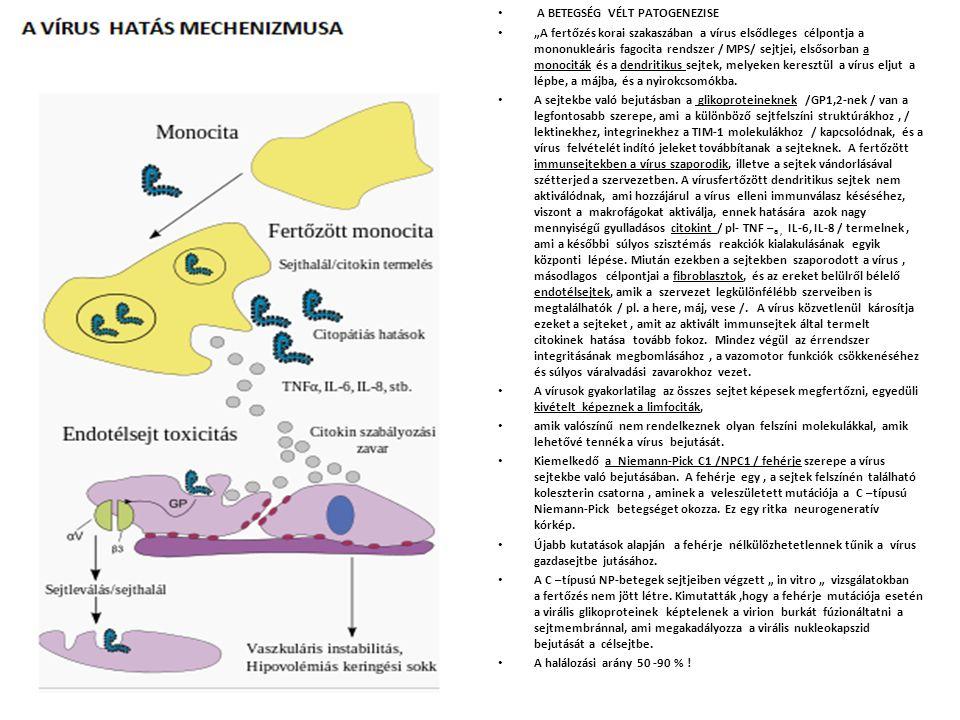"""A BETEGSÉG VÉLT PATOGENEZISE """"A fertőzés korai szakaszában a vírus elsődleges célpontja a mononukleáris fagocita rendszer / MPS/ sejtjei, elsősorban a monociták és a dendritikus sejtek, melyeken keresztül a vírus eljut a lépbe, a májba, és a nyirokcsomókba."""