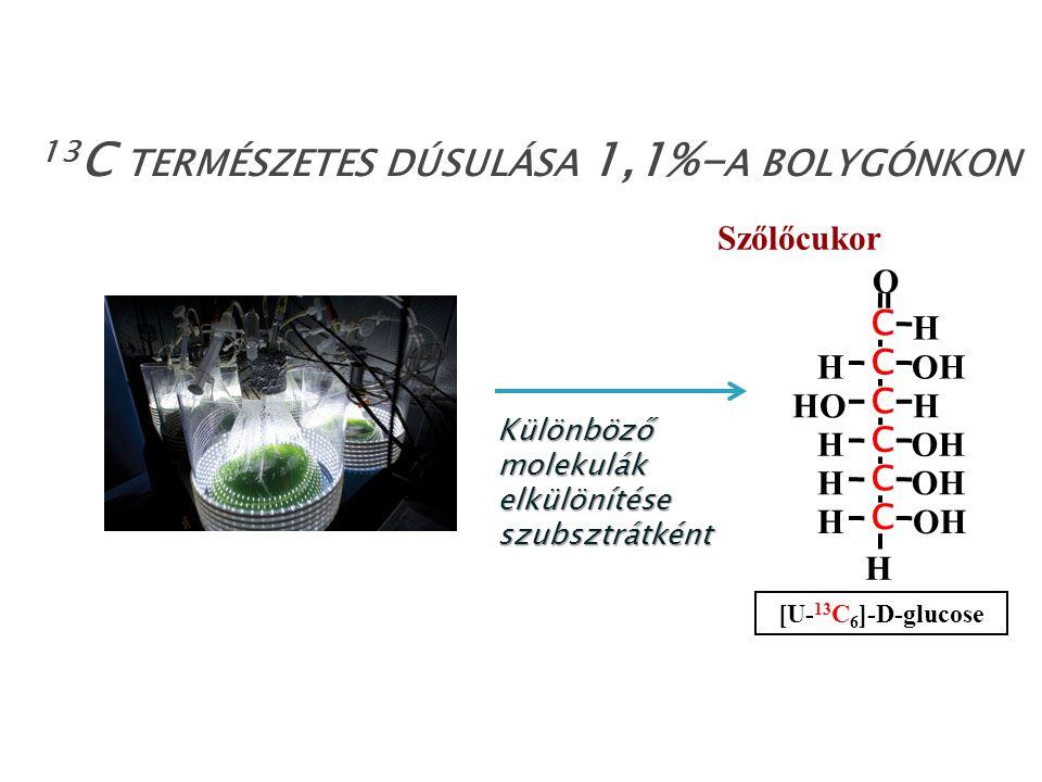 Különböző molekulák elkülönítése szubsztrátként 13 C TERMÉSZETES DÚSULÁSA 1,1%- A BOLYGÓNKON HO H OH C C C C C C O H H H H H H [U- 13 C 6 ]-D-glucose