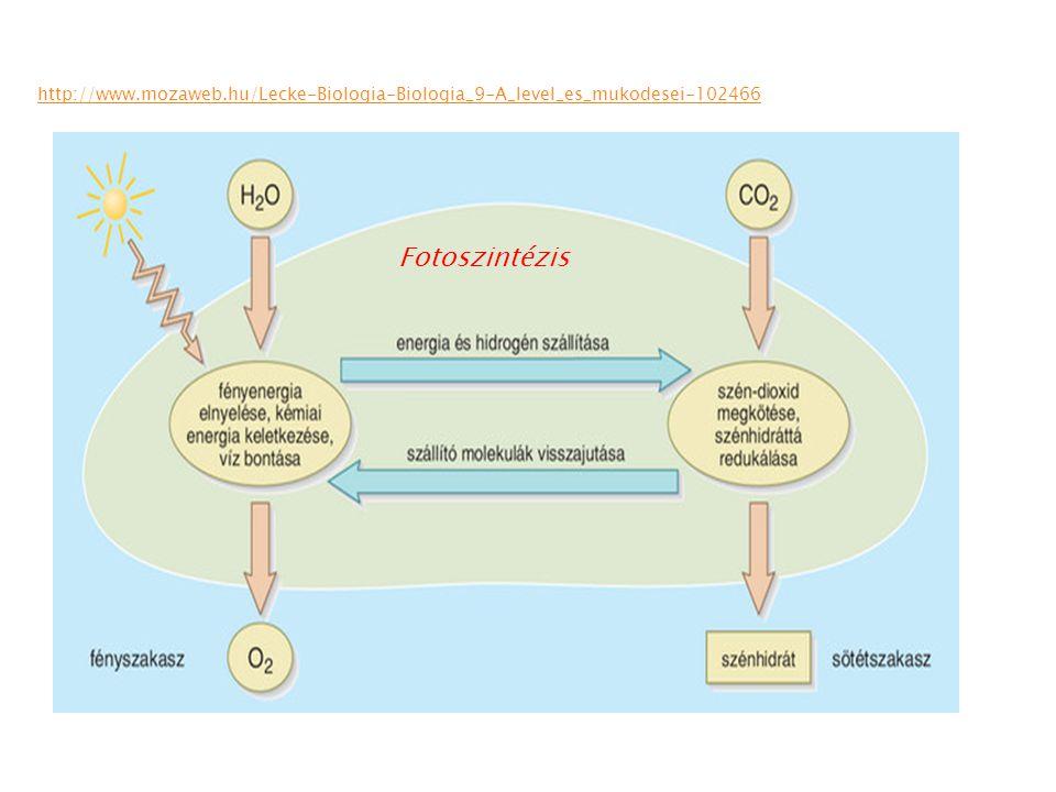 http://www.mozaweb.hu/Lecke-Biologia-Biologia_9-A_level_es_mukodesei-102466 Fotoszintézis