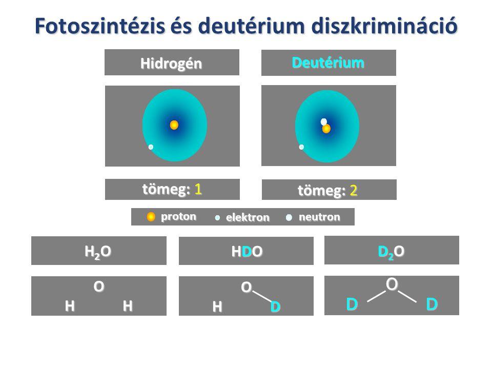 Fotoszintézis és deutérium diszkrimináció Hidrogén Deutérium tömeg: 1 tömeg: 2 H2OH2OH2OH2O HDOHDOHDOHDO D2OD2OD2OD2O O H H O H D O D D proton elektro