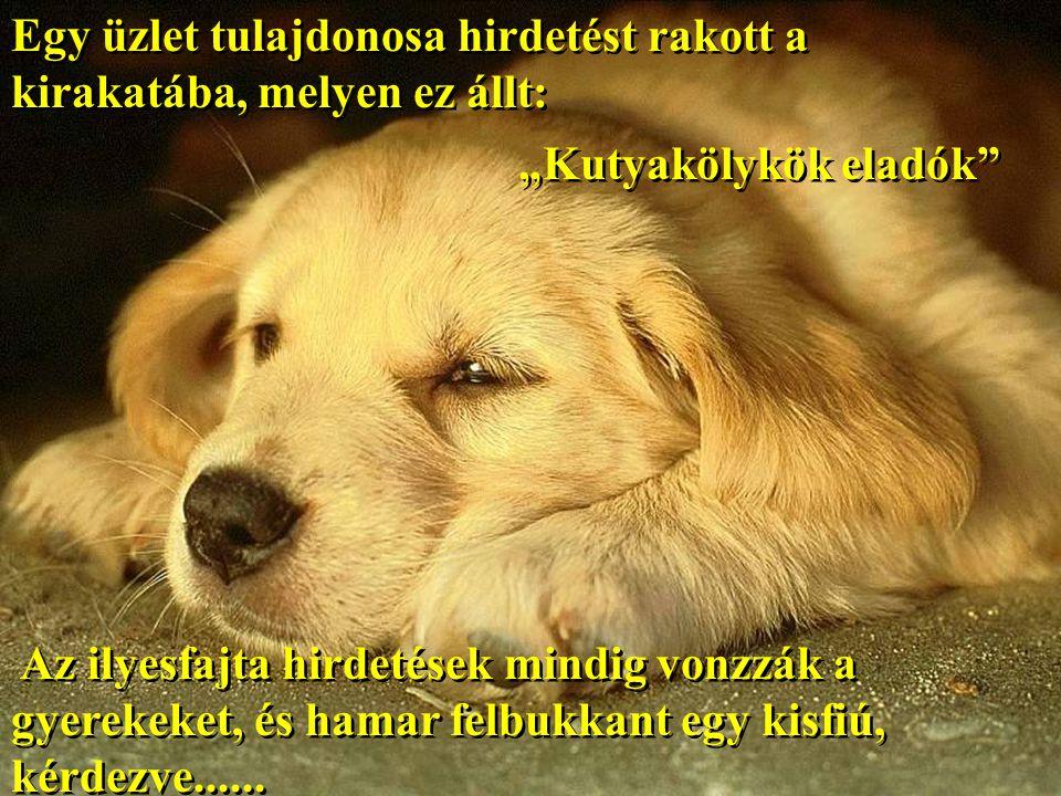 """Egy üzlet tulajdonosa hirdetést rakott a kirakatába, melyen ez állt: """"Kutyakölykök eladók Az ilyesfajta hirdetések mindig vonzzák a gyerekeket, és hamar felbukkant egy kisfiú, kérdezve......"""