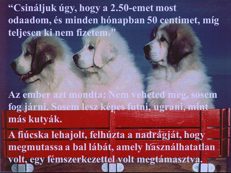 Az ember elmagyarázta, hogy a kutyus csípő- problémával született, és örökké sántítani fog.
