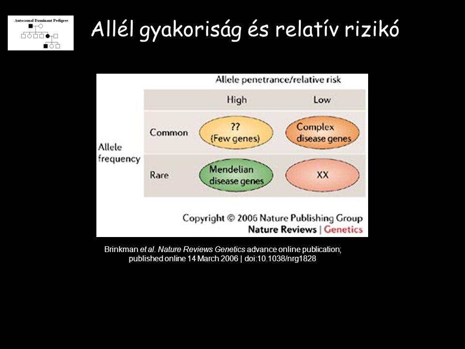 Allél gyakoriság és relatív rizikó Brinkman et al.