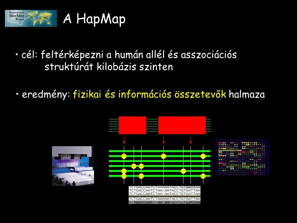 A HapMap cél: feltérképezni a humán allél és asszociációs struktúrát kilobázis szinten eredmény: fizikai és információs összetevők halmaza