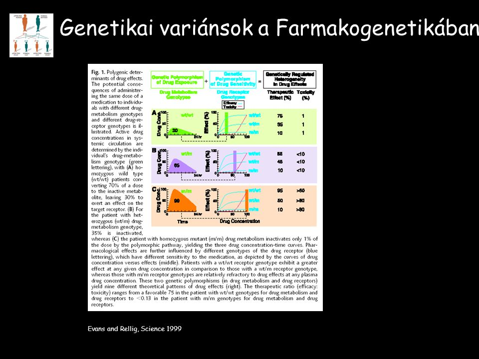 Genetikai variánsok a Farmakogenetikában Evans and Rellig, Science 1999