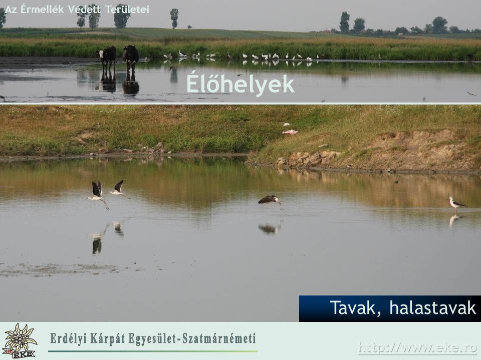 Az Érmellék Védett Területei Tavak, halastavak Élőhelyek