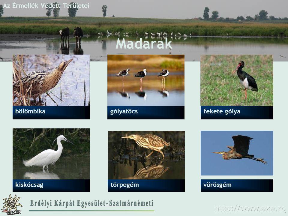 Az Érmellék Védett Területei Madarak gólyatöcsfekete gólya törpegémkiskócsag bölömbika vörösgém