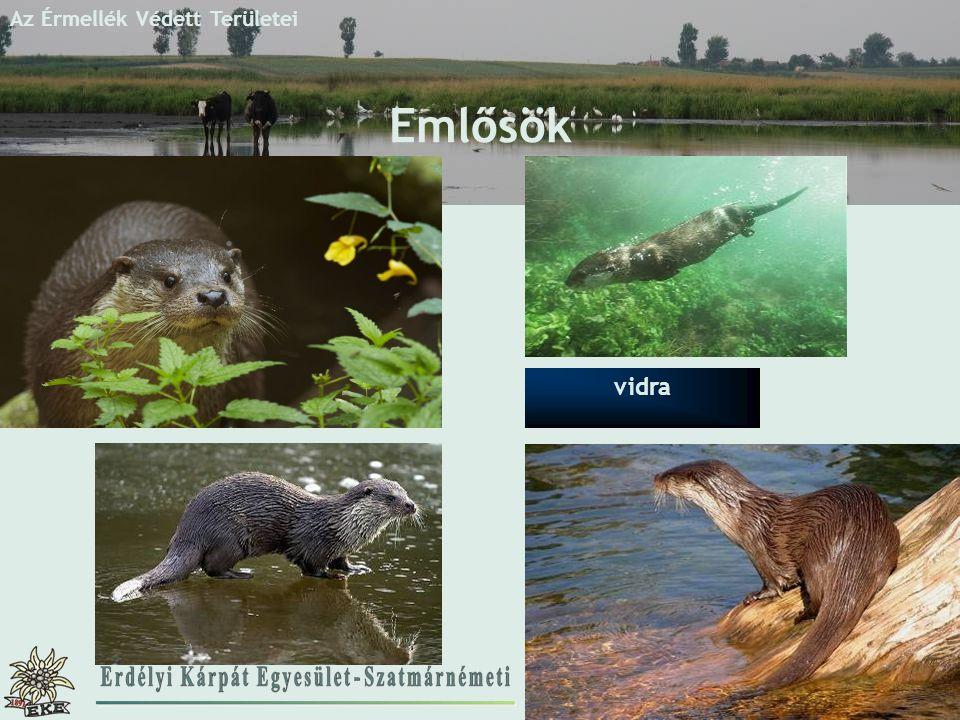 Az Érmellék Védett Területei Emlősök vidra