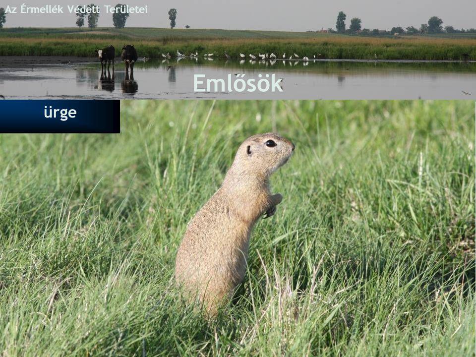 Az Érmellék Védett Területei Emlősök ürge