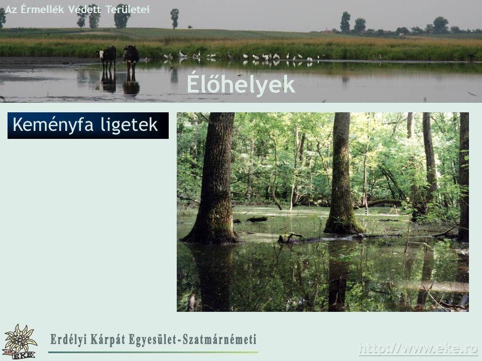 Az Érmellék Védett Területei Élőhelyek Keményfa ligetek