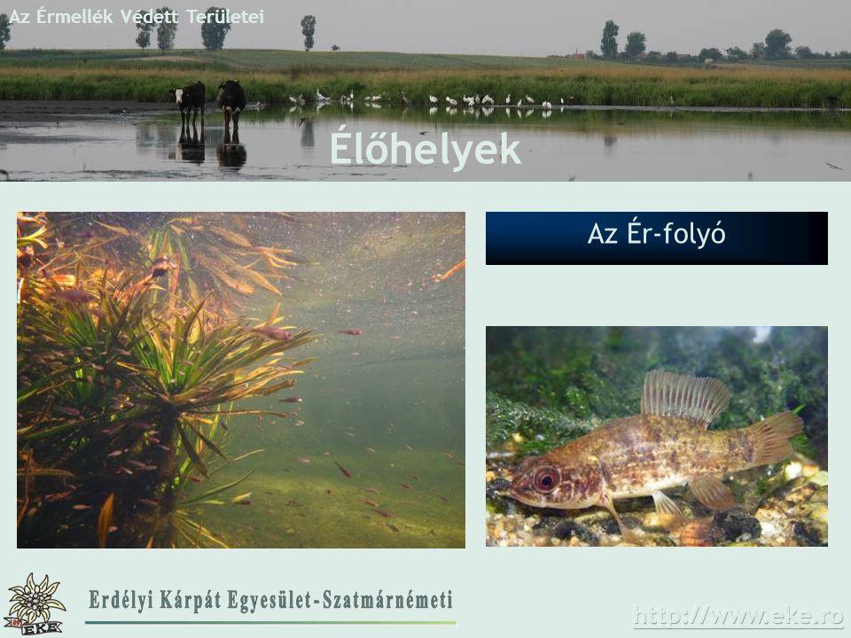 Az Érmellék Védett Területei Az Ér-folyó Élőhelyek